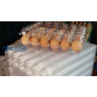 fresh-table-eggs-and-30-holes-transparent-egg-crates-small-2