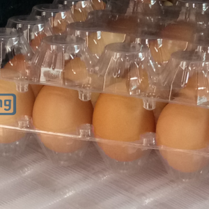 FRESH TABLE EGGS AND 30 HOLES TRANSPARENT EGG CRATES
