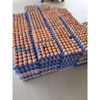 fresh-poultry-eggs-small-1